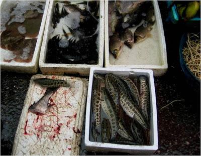fish for sale at Nanshi Market in Shanghai
