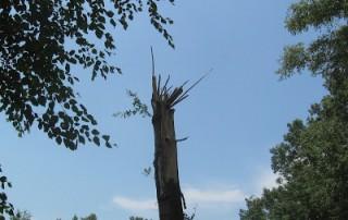 standing broken off tree trunk
