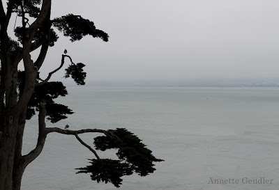 Cypress and view of ocean at Alcatraz