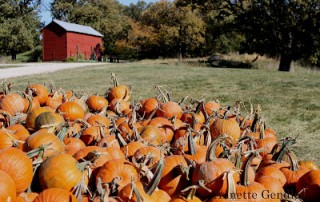collection of pumpkins in front of barn