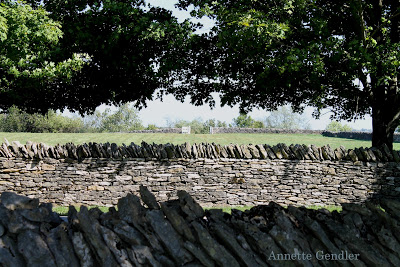 stone fence in Kentucky with green trees