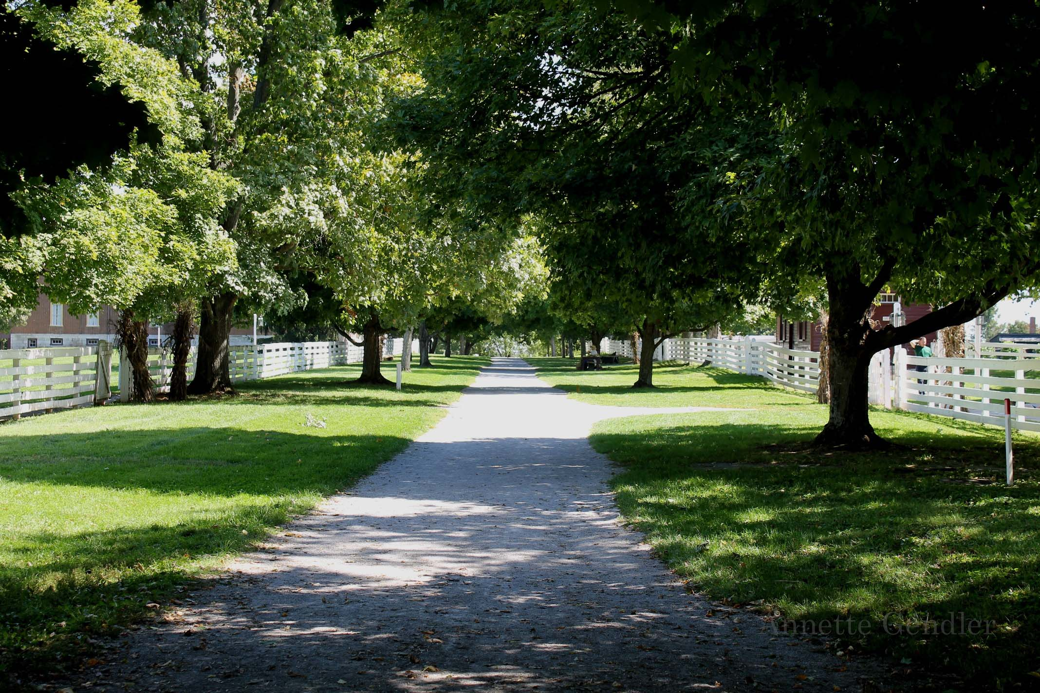 gravel path with green trees on both sides in Shaker Village
