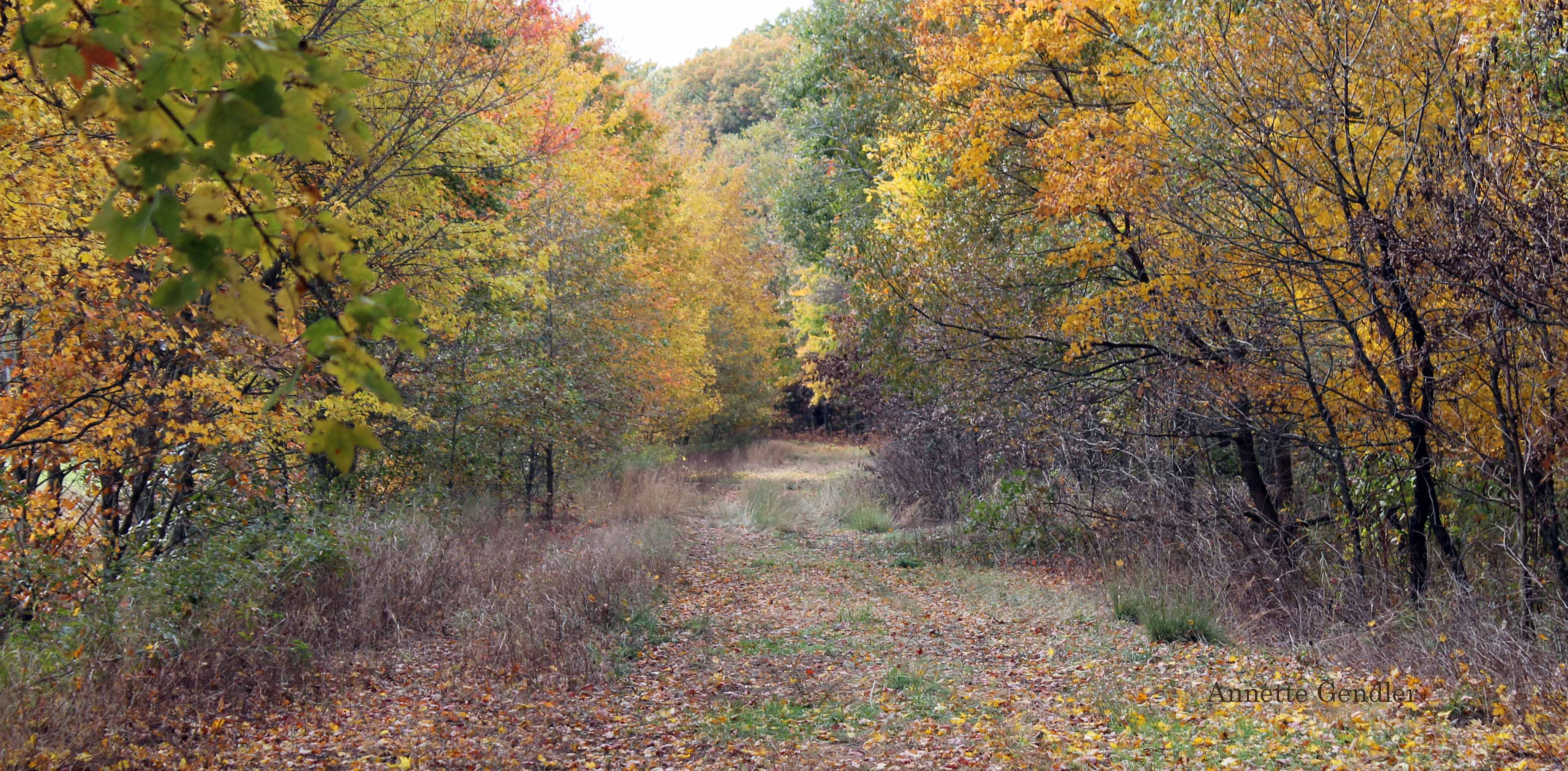 wooden path in fall strewn with colorful leaves