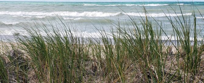 Dune grass with waves behind it